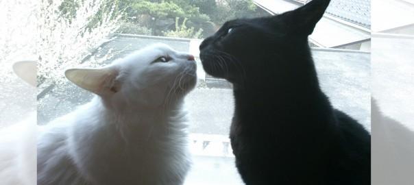 【今日のにゃんこ】美男美女の兄妹ネコ「ジジちゃん」と「ジャンヌちゃん」