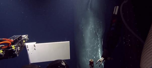【超レア】優雅に深海を泳ぐマッコウクジラの姿が目の前に!