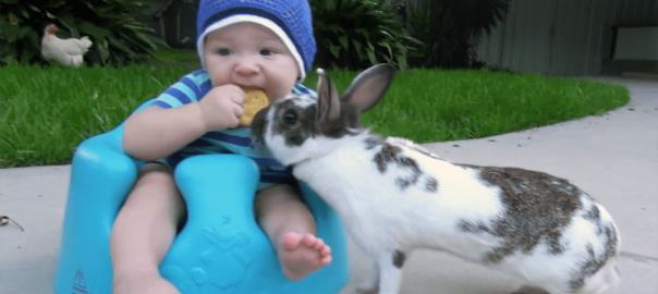 「それ、いただきっ!」赤ちゃんからクッキーを華麗に奪うウサギ