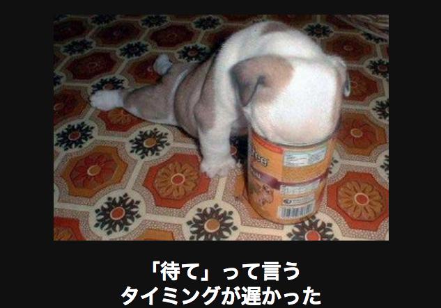 缶に顔を突っ込む犬