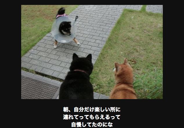 対峙する犬