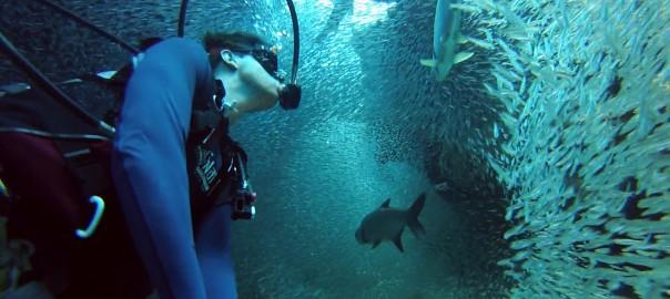 リアル「スイミー」。100万匹の魚と泳ぐダイバーの視線がファンタジー