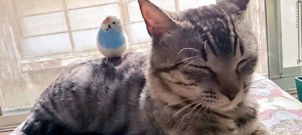 【今日のにゃんこ】いつも一緒の仲良しコンビ!ネコの「鈴音ちゃん」とインコの「京子ちゃん」
