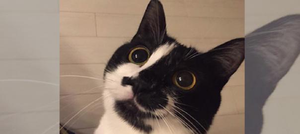 ハムくれ!「猫をかぶるネコちゃん」が正直すぎてかわいい!