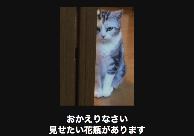 10587 ネコ