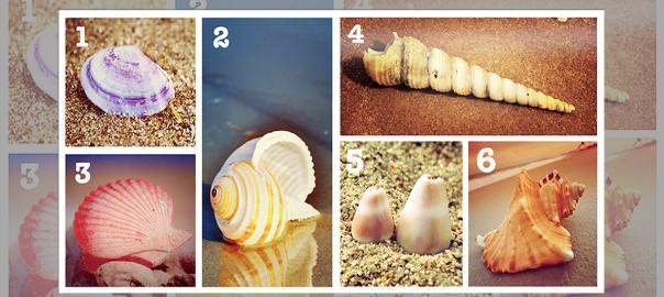 【性格診断】あなたはどの貝殻に惹かれますか?