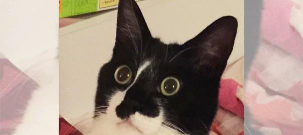 ネコ「オレ、もういらない子・・・?」ご主人に叱られたニャンコの表情が衝撃的すぎる(画像8枚)