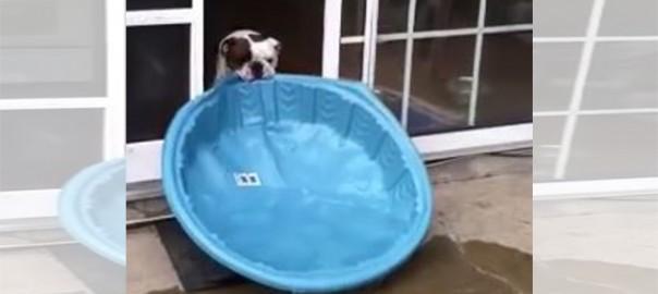 力づくすぎるでしょ!プールを家の中に持ち込みたいワンコの奮闘劇