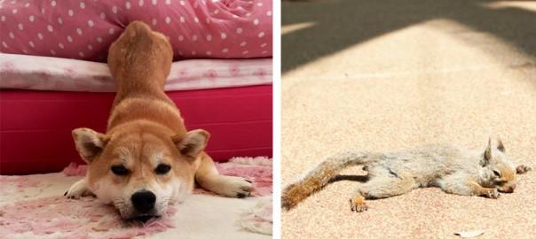 動物界にも五月病が広がっていることが判明(画像18選)