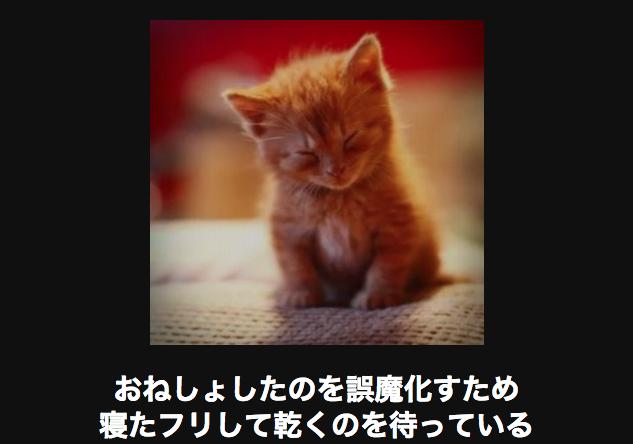 13841 ネコ