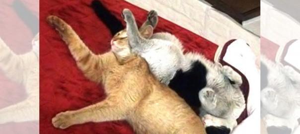 【今日のにゃんこ】どこからともなくこんにちは「放浪ネコちゃんたち」