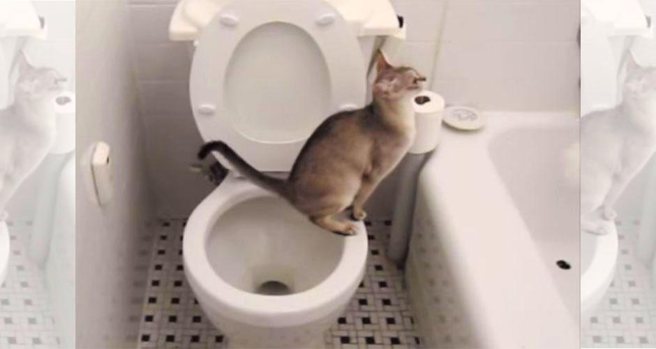 2591943_toiletcat