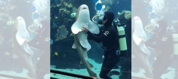 「撫でて~♡」人間によしよしして欲しい「かまってちゃんのサメ」