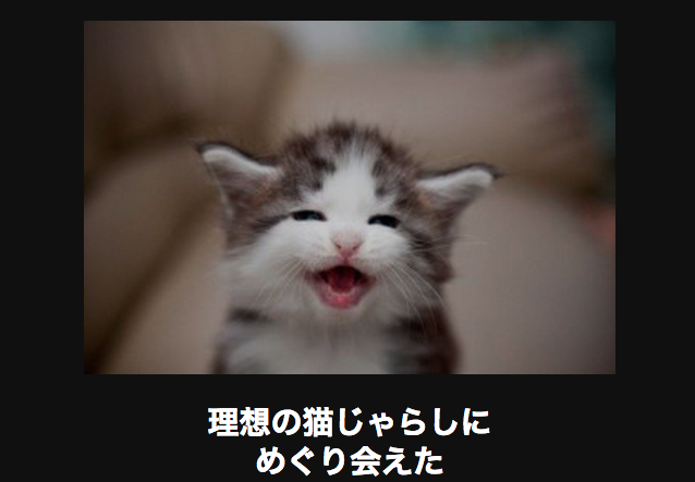 10731 ネコ