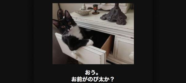【ネコ好きは見逃せない】笑いと癒やしを兼ね備えたネコ大喜利18選