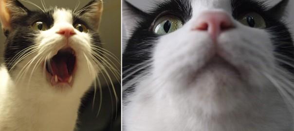 【今日のにゃんこ】表情が豊かな自称アイドルのネコ「アムロちゃん」