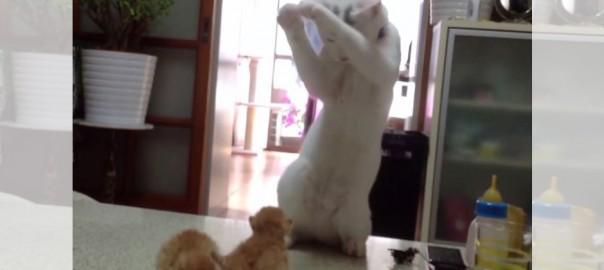「どうすれば・・・?!」子猫の扱い方が分からなくて、もう踊るしかないニャンコ