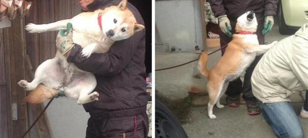 犬「ご主人!お手伝いします!」ワンコの空回りっぷりに思わずクスリ(画像7枚)