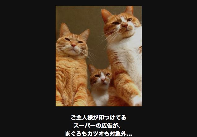 10207 ネコ