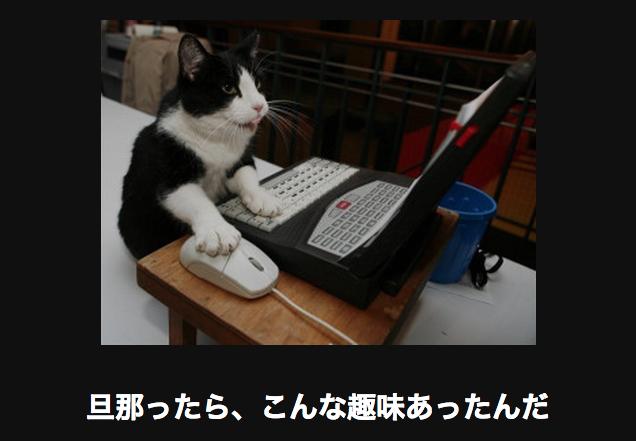 15552 ネコ