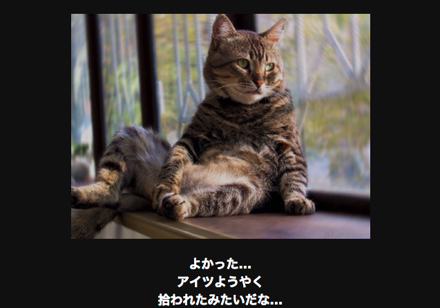 15864 ネコ