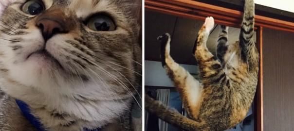 【今日のにゃんこ】可愛い顔して超活発!脚力が自慢のネコ「ムギちゃん」