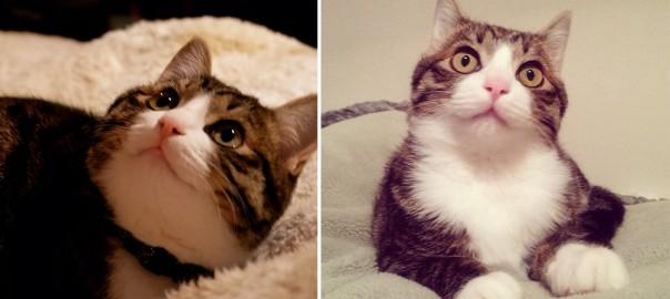 【今日のにゃんこ】いろんな表情で楽しませてくれるネコ「アデルちゃん」