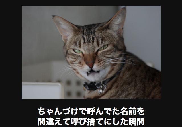 15060 ネコ