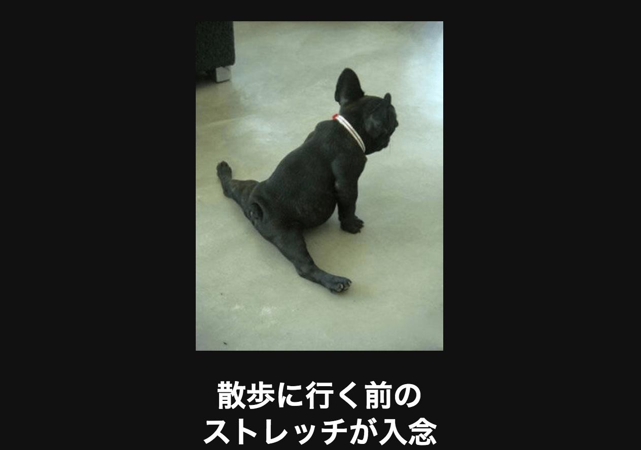 ストレッチする犬 アメーバ大喜利