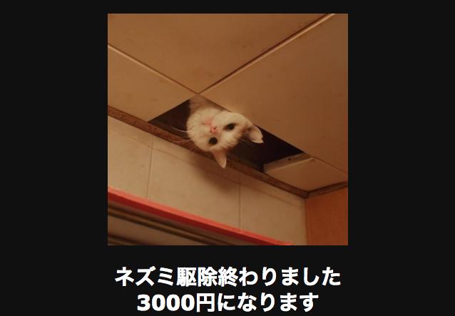 11027 ネコ