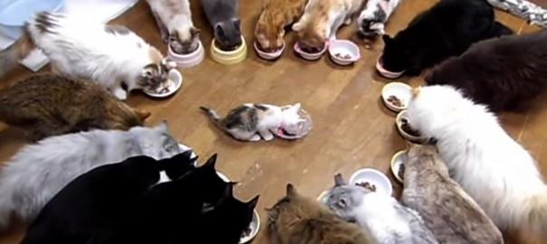 今日は送別会!旅立つ子猫を囲んで、最後の食事をするニャンコたちにほっこり