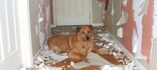 【犬の飼い主の8割が経験】帰宅したら、家がハチャメチャになっていた(画像13枚)