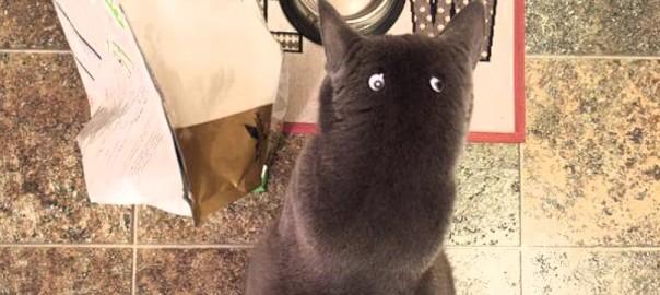 小さいトトロみたい!後頭部についた目玉シールに全く気づかないネコ(画像4枚)