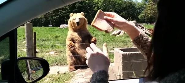 0840349_bear0