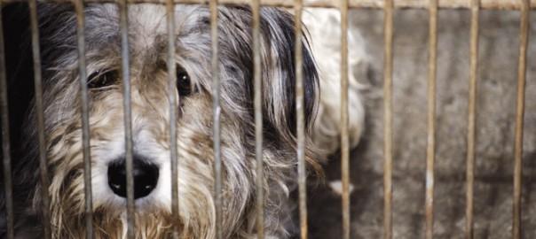 【ペットを飼うときはペットショップへは行かない】動物の殺処分が無いドイツにある「ティアハイム」とは?