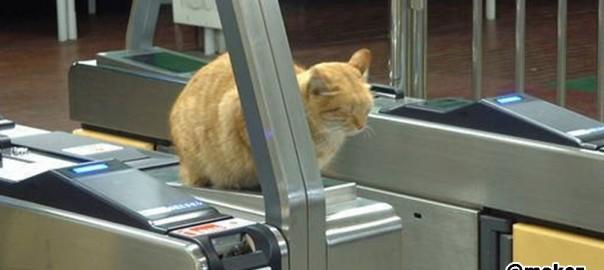 ネコはどこで寝ても許されるとわかる17の写真