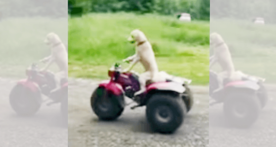 dogride