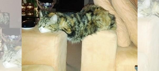 そこで寝るの?! ちょっと変わったモノを枕にするネコ15選
