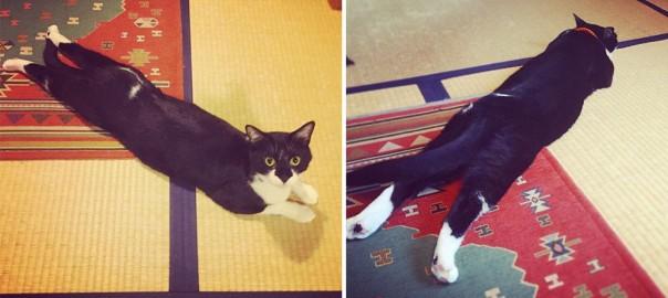 【今日のにゃんこ】カーペットのそこにこだわりが?角を陣取る猫「メチャちゃん」