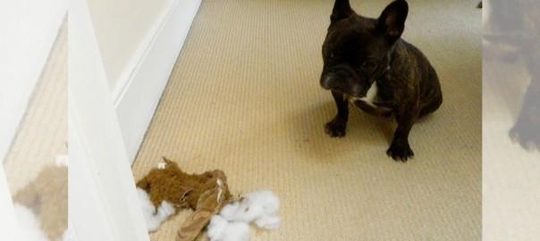 「ほんの出来心だったんです・・・」大切な相棒を破壊してしまった犬12選