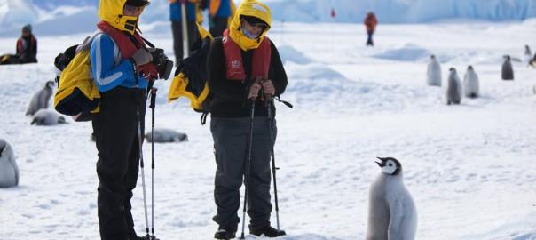 「陸はちょっと苦手なんです」ドジっ子すぎて助けたくなるペンギン12選