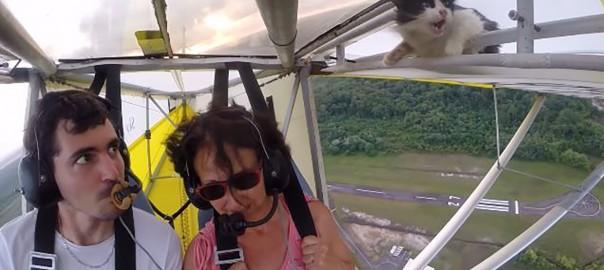 これはヒヤヒヤ(汗) グライダーで飛行中の翼の中にニャンコが!