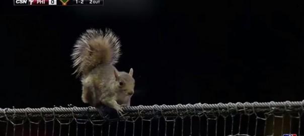 野球はどうした!フェンスの上に現れたリスに観客全員釘付け