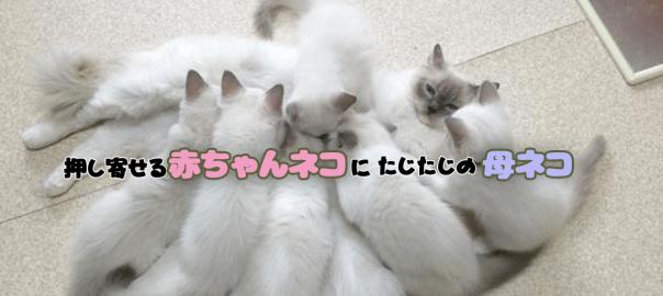 「ママ!お腹空いたよ!」押し寄せる赤ちゃんネコにたじたじの母ネコ(画像4枚)