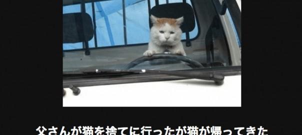 【注意キケン】電車で読んではいけにゃいネコの画像大喜利17選