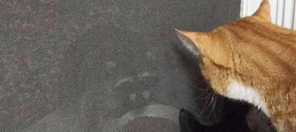 珍客に猫たち興味津々!夕ご飯を食べようとしらアライグマが先に食べてた(画像4枚)