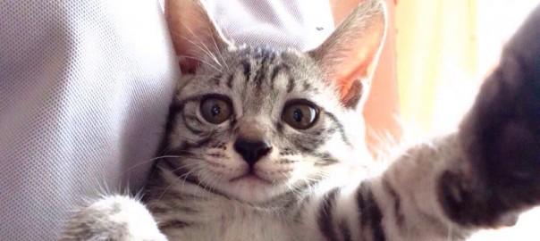【今日のにゃんこ】奇跡の1枚も!自撮りが可愛く決まるイマドキネコ「みゅうちゃん」
