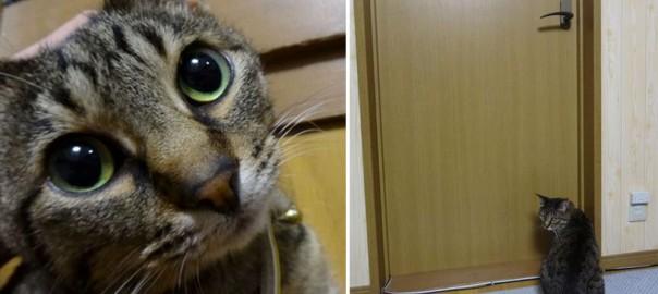 ネコがドアを開けられないので、にゃんこ用ドアを作ってみたところ・・・。(画像11枚)