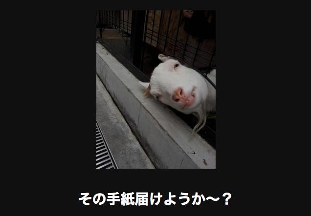 13412 動物