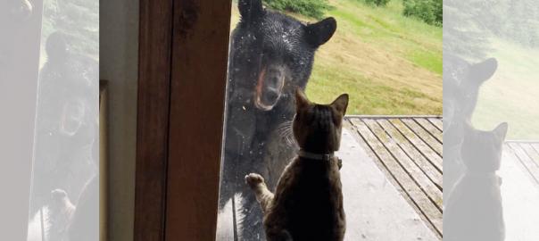 意外な結末!家に近づいてきたクマに、勇敢なニャンコがとった行動とは?!